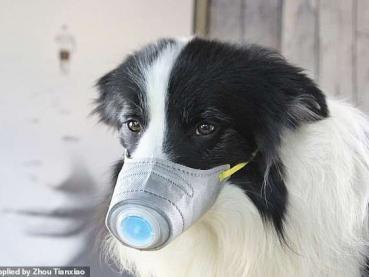 2019-nCoV phát tán như nào? Có thể nhiễm từ động vật, thú cưng không?